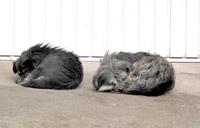 schlafende Esel Bilder